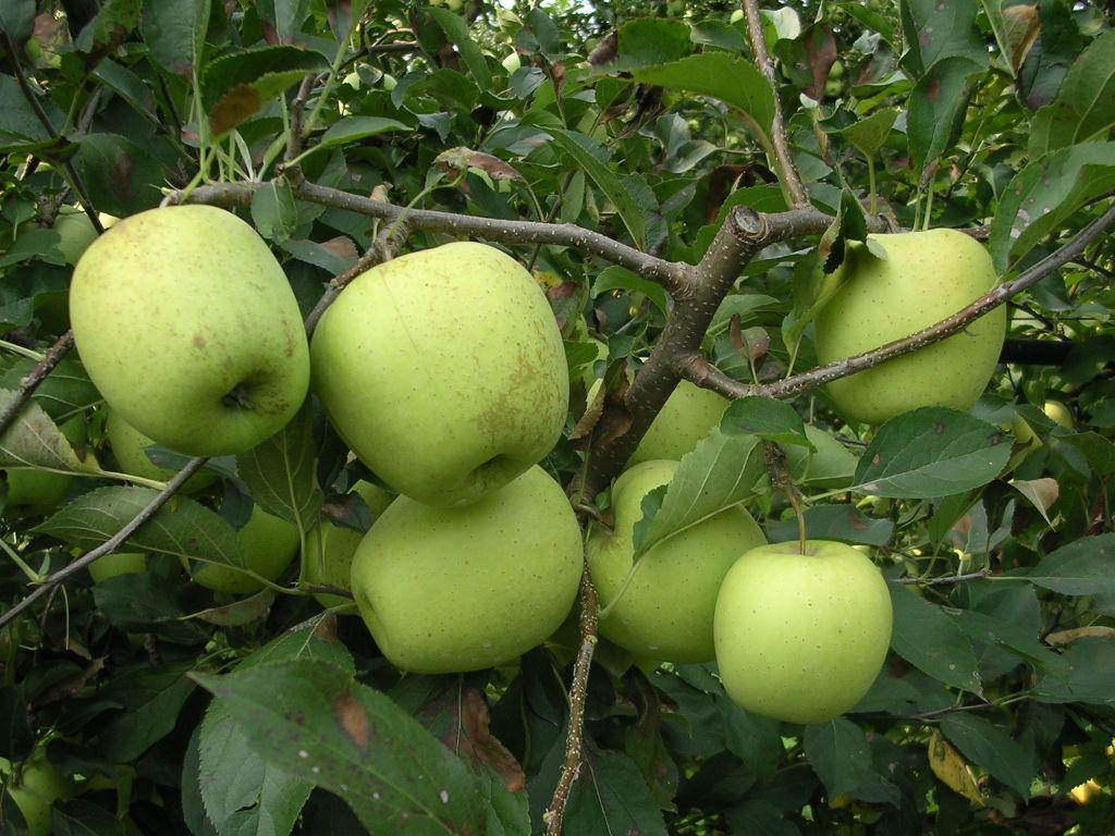La terra delle mele e le ville municipio